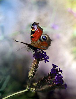 Butterfly, Insect, Pollinate, Pollination, Flower