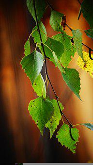 Plant, Tree, Leaves, Foliage, Greenery, Flora, Garden