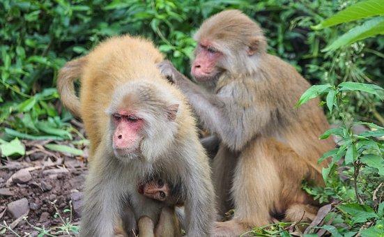 Monkeys, Monkey Family, Family, Primate, Mammal, Animal