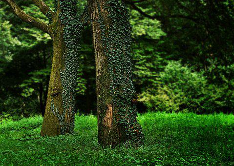 Trees, Moss, Forest, Woods, Grass, Foliage, Nature