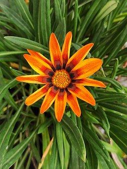 Flower, Orange Flower, Bloom, Blossom, Petals, Leaves
