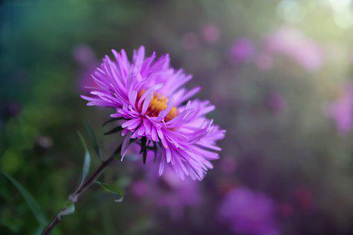 Flower, Purple Flower, Bloom, Blossom, Purple Petals
