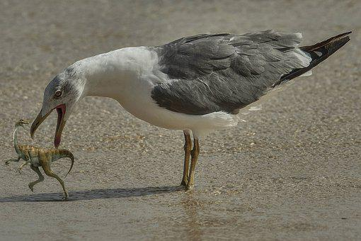 Seagull, Bird, Dinosaur, Prehistoric, Beach, Sand