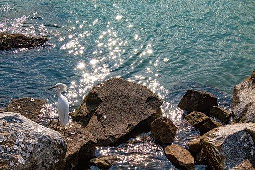 Heron, Bird, Water Bird, Waterfowl, White Bird, Seabird