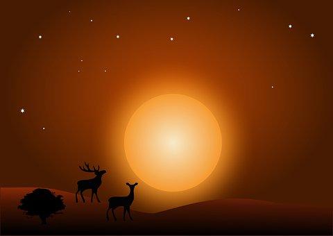 Deer, Forest, Elk, Antlers, Night, Moon, Stars, Sky