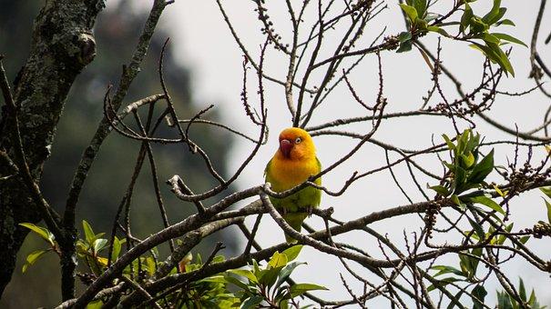 Parakeet, Bird, Animal, Tropical, Avian, Wildlife