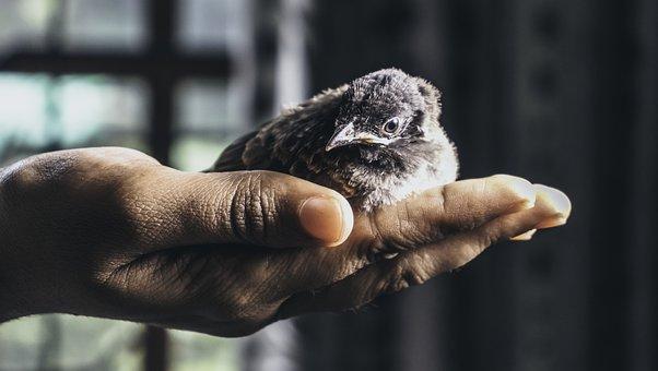 Bird, Hatchling, Animal, Chick, Baby Bird, Small Bird