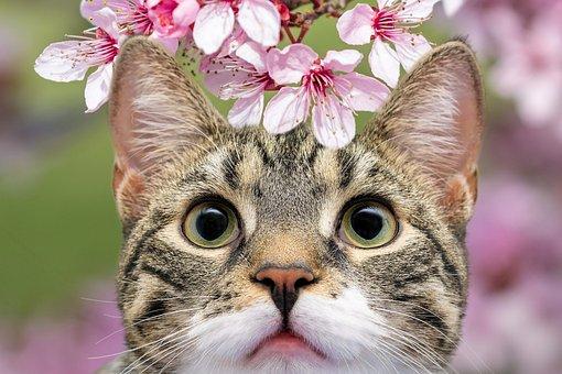 Cat, Pet, Animal, Domestic Cat, Feline