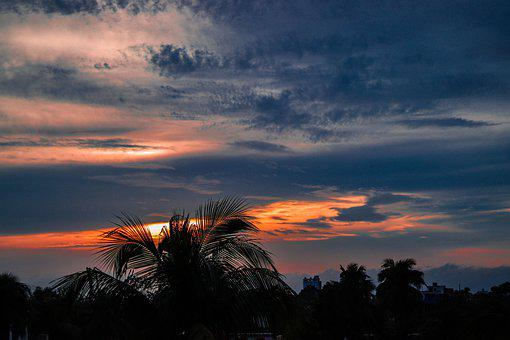 Clouds, Sky, Sunset, Palm Trees, Trees, Silhouette