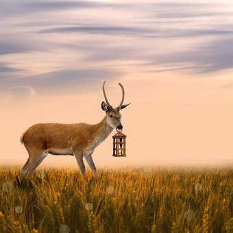 Deer, Roe Deer, Fantasy, Lantern, Lamp, Meadow, Field