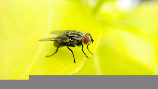 Housefly, Fly, Insect, Leaf, Nature, Closeup