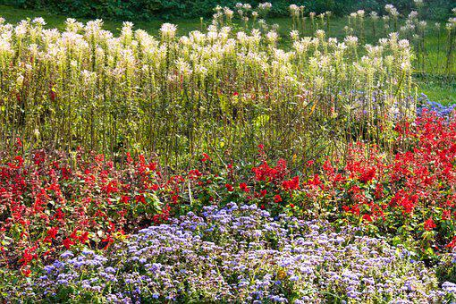 Flowers, Colorful, Garden, Field, Meadow, Spring