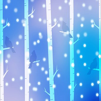 Forest, Trees, Digital Paper, Birch, Snow, Birds