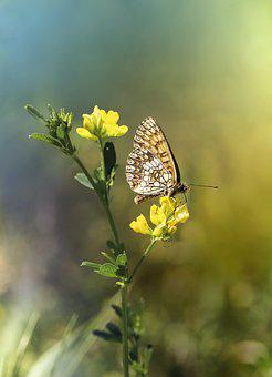 Butterfly, Insect, Bug, Flower, Petals, Animal, Meadow