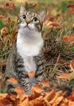 Cat, Feline, Leaves, Domestic, Pet, Autumn, Animal