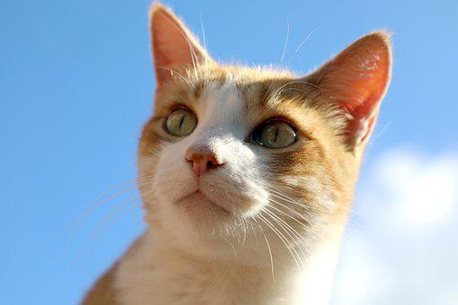 Cat, Look, Whiskers, Cat's Eyes, Cat Profile