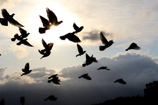Birds, Flock, Wings, Sky, Clouds, Flight, Nature