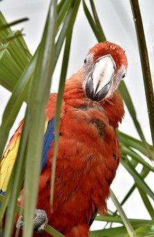 Parrot, Bird, Exotic, Colorful, Beak, Plumage, Wings
