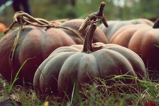 Pumpkin, Vegetables, Harvest, Squash, Produce, Food