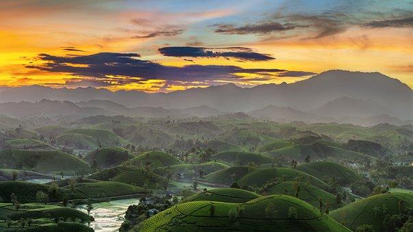 Hills, Paddies, Plantation, Rice Paddies