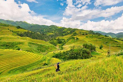 Farmer, Rice Fields, Paddies, Plantation, Fields, Rice