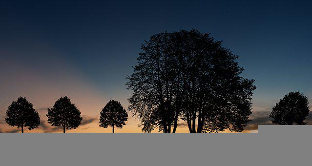 Silhouette, Twilight, Afterglow, Trees, Leaves, Forest