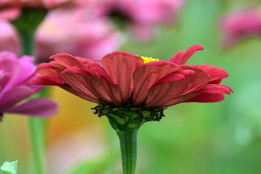 Flower, Petals, Stem, Garden, Flora, Blooming, Colorful