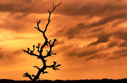 Tree, Silhouette, Sunset, Dead Tree, Dead Branches