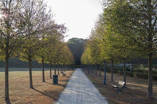 Path, Park, Trees, Woods, Foliage, Garden, Pathway
