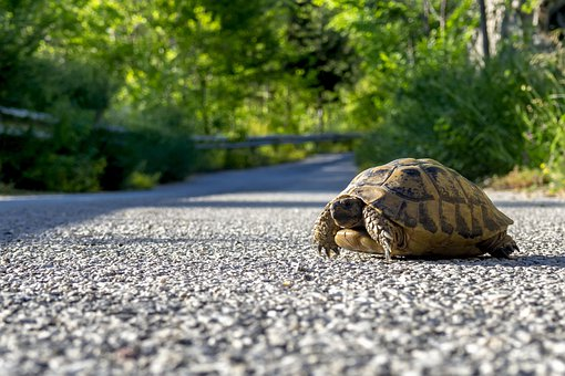 Turtle, Shell, Road, Street, Reptile, Marine Reptile