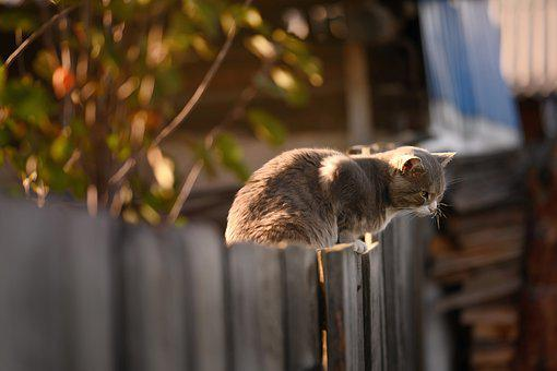 Cat, Fence, Wooden, Kitty, Kitten, Feline, Pet