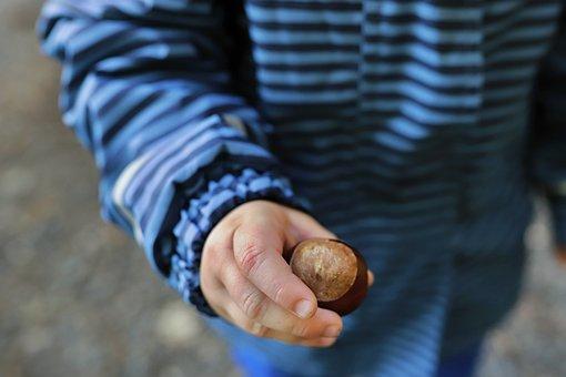 Chestnut, Nut, Hand, Child, Boy, Food, Fruit, Closeup