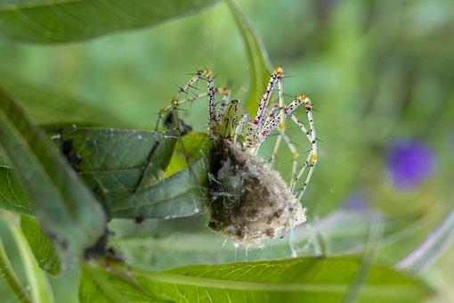 Spider, Web, Arachnid, Insect, Creepy, Spiderweb, Silk