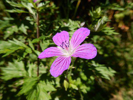Flower, Petals, Leaves, Foliage, Stamens, Nature