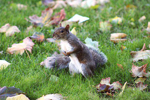 Squirrel, Chipmunk, Rodent, Grass, Leaves, Foliage