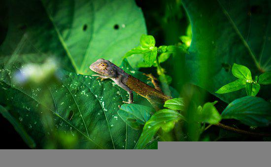 Newt, Salamander, Leaves, Plant, Foliage, Greenery