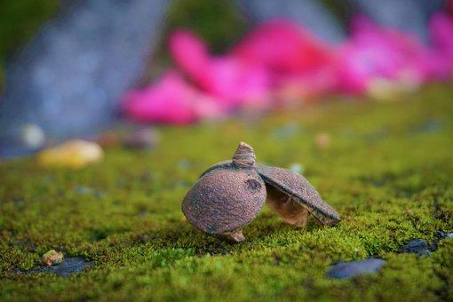 Mushrooms, Moss, Nature, Concrete, Wall, Toadstools