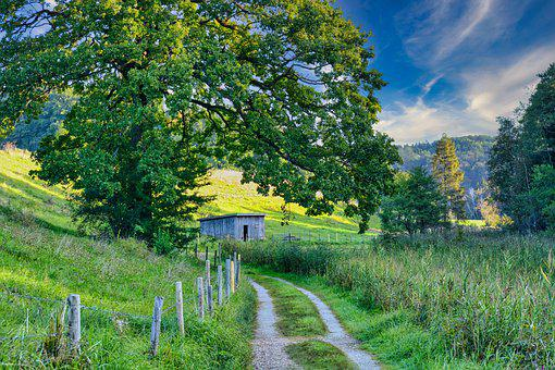 Trail, Meadow, Rural, Countryside, Path, Pathway, Trees