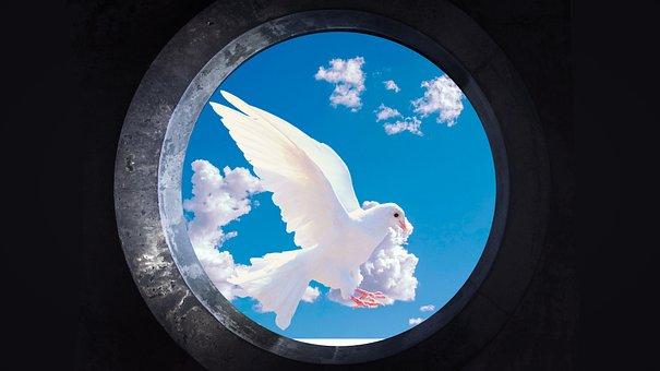 Dove, Flying, Sky, Flight, Pigeon, Wings, Bird, Avian