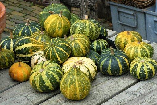 Gourds, Pumpkins, Squash, Vegetables, Harvest, Produce