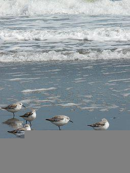 Birds, Seabirds, Beach, Flock, Sand, Seascape, Sea