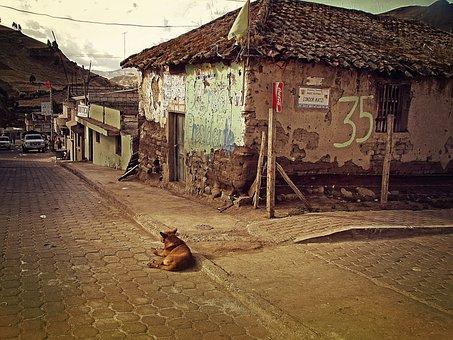 Ecuador, Zimbaua, Village, Lonely, Alone, Stray, Dog