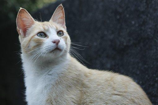 Cat, Feline, Feline Stopped, Animal, Kitten
