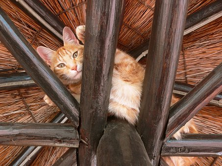 Cat, Ginger, Paws, Rafters, High, Fur
