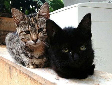 Cats, Kittens, Cuteness, Feline, Animal, Pet