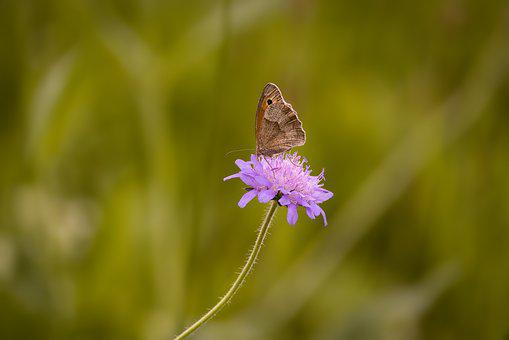 Butterfly, Insect, Flight Insect, Landed, Nature, Close