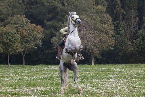 Horse, Jockey, Runaway Horse