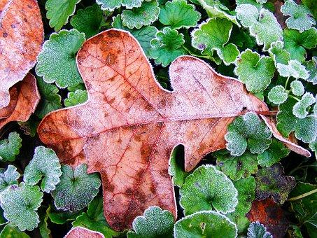 Leaf, Autumn, Season, Leaves, Plant, Green, Fall, Frost