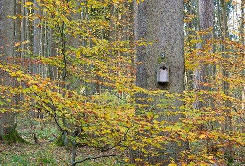 Tree, Log, Bird's Nest, Nest, Autumn, Forest, Leaves