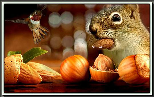 The Squirrel, Nuts, Fruit, Bird, Eating, Meal, Treats